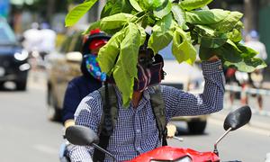 Sài Gòn có thể nóng 39-40 độ C