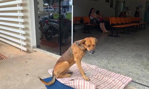 Con chó kiên trì chờ trước cửa bệnh viện. Ảnh:Cristine Sardella.
