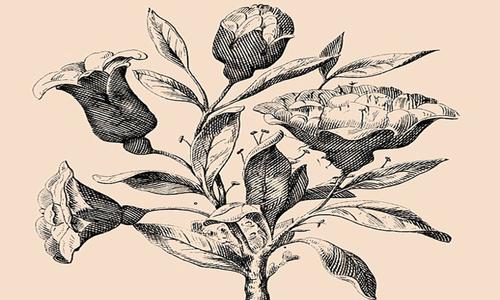 Bạn có tìm được 6 khuôn mặt ẩn trong đóa hoa hồng này?