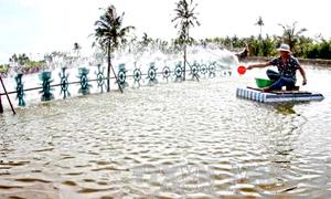 Nông dân miền Tây mua nước mặn nuôi tôm