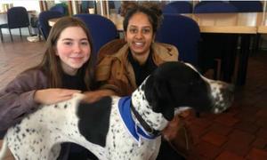 Sinh viên Anh giải tỏa căng thẳng nhờ chó trị liệu
