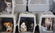 Chú chó chết trong khoang đựng hành lý trên máy bay Mỹ