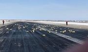 Máy bay Nga bung cửa, hơn ba tấn vàng rơi xuống đất