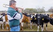 Nông dân Mỹ thổi kèn trumpet cho bò thư giãn