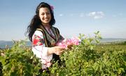 Mùa hái hoa hồng làm tinh dầu ở Bulgari