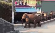 Bầy voi hoang dã quậy phá ngôi làng ở Trung Quốc