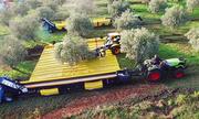 Cỗ máy thu hoạch 1.200 cây ô liu mỗi ngày