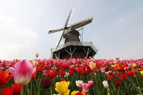 Tìm hiểu các ngành học xu hướng 2018 tại Hà Lan