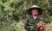 Nông dân hưởng lợi nhờ ứng dụng công nghệ cao