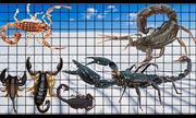 So sánh kích thước những loài bọ cạp lớn nhất thế giới