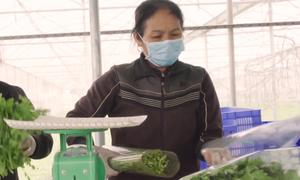 6.000 tấn rau an toàn gắn tem nhãn ở Bắc Giang