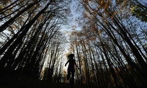 Bài học từ lớp mẫu giáo trong rừng của trẻ em Phần Lan