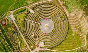 Mê cung khổng lồ tạo bằng 12.000 cây hồng lộc ở Hà Nội