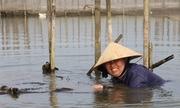 Người dân Huế dầm mình dưới nước vớt rau câu