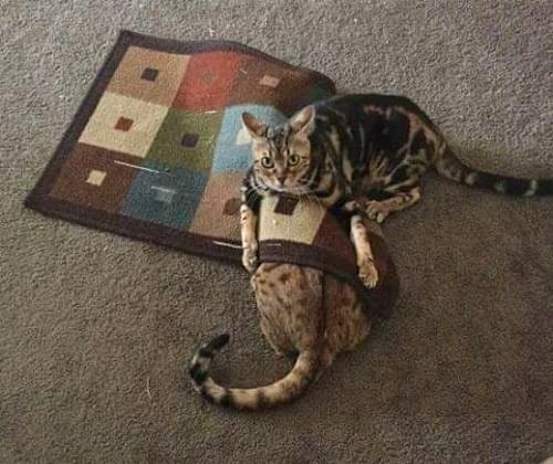 Giết mèo diệt khẩu.