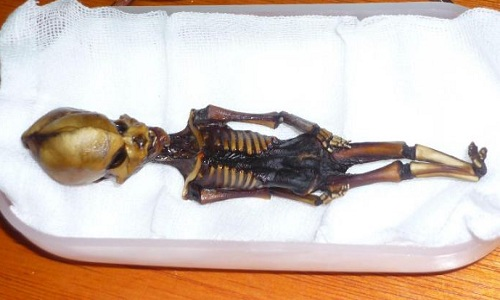 Xác ướp 15 cm nghi 'người ngoài hành tinh' ở Chile
