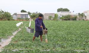 Tự chế phễu tiết kiệm nước để tưới cây mùa hạn mặn miền Tây