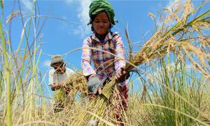 Ngân hàng Thế giới hỗ trợ cải thiện ô nhiễm nông nghiệp tại Đông Á