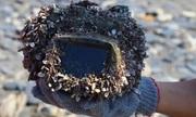 Máy ảnh trôi dạt hai năm trên biển vẫn hoạt động tốt