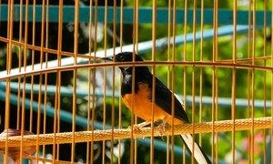Thú chơi chim kiểng trong công viên Tao Đàn
