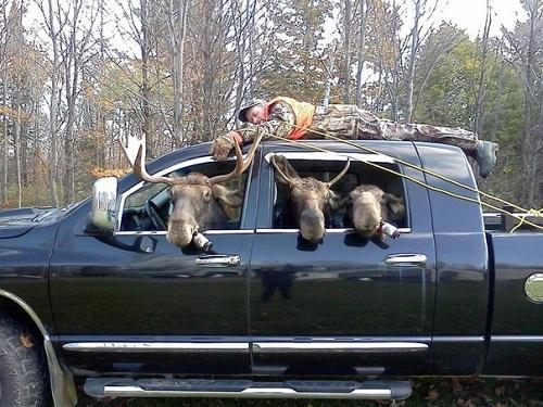 Khi thợ săn bị phản kích.