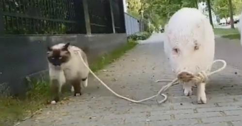 Khôn như lợn