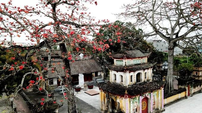 Hoa gạo nở đỏ rực trên ngôi chùa hơn 400 tuổi ở Hải Phòng