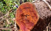 Quảng Nam đình chỉ công tác sáu cán bộ để xảy ra phá rừng