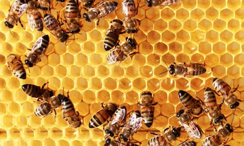 Bác sĩ mất một giờ gắp hàng trăm nọc ong đốt trên cơ thể bé trai