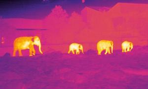 Công nghệ săn thiên hà giúp bảo vệ động vật quý hiếm