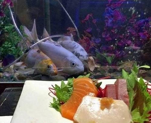 Phim kinh dị của loài cá.
