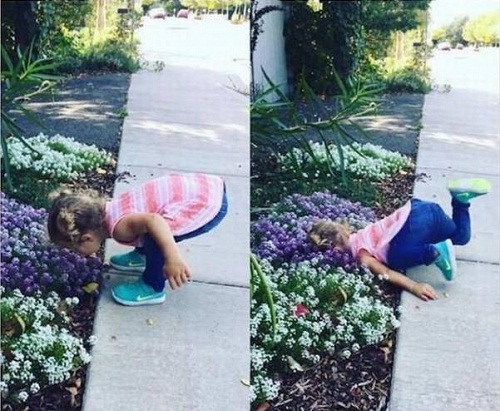 Gặp nạn vì hoa thơm cỏ lạ.