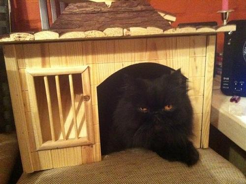 Con mèo đen Ba Tư, thú cưng của ông Skripal. Ảnh: Mirror.