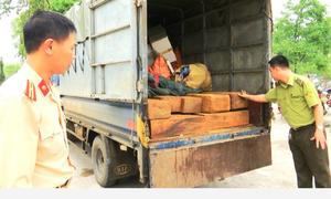 Bắt xe tải chở gần 2 mét khối gỗ quý ở Lào Cai