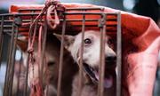 Người Việt ở Malaysia bị chỉ trích vì bán thịt chó