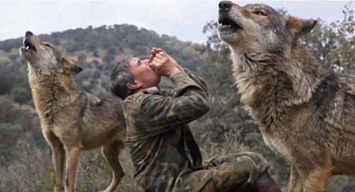 Pantoja nô đùa cùng bầy sói trong phóng sự năm 2013 của BBC. Ảnh: BBC.