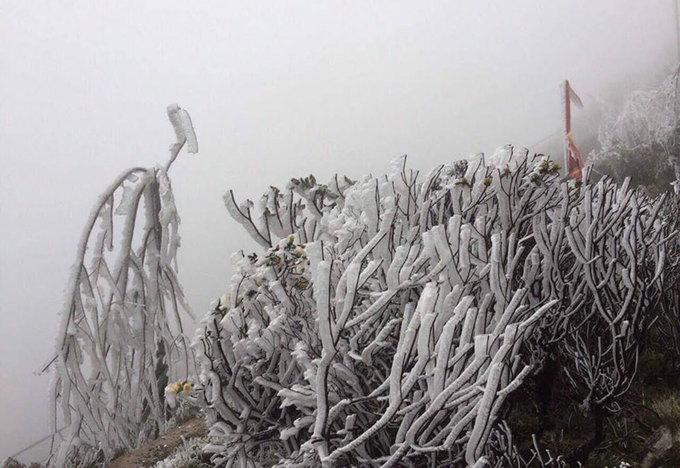 Băng giá bao phủ cây cỏ ở đỉnh Fansipan