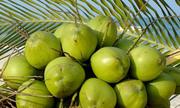 Bài toán về những trái dừa của ba chàng thủy thủ