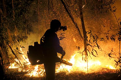 Khu bảo tồn thiên nhiên Tà Cú (Bình Thuận) cháy trong nhiều giờ. Ảnh: Tư Huynh.