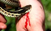 Bệnh nhân bị rắn cắn thiệt mạng, người nhà đổ lỗi do bác sĩ thờ ơ
