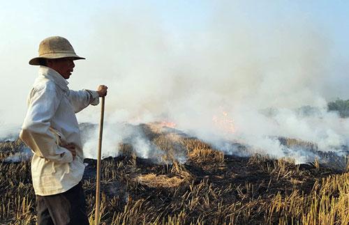 Sau mỗi mùa thu hoạch, người dân lại đốt đồng nhằm tận dụng tro làm phân bón. Ảnh: Phước Tuấn.