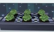 Kỹ thuật trồng rau trong trời lạnh âm độ ở Nam Cực