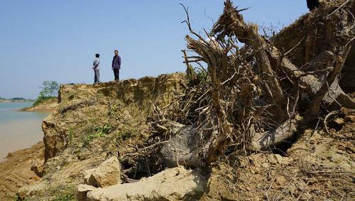 đê sông Chu ở xã Thiệu Đô bị sạt lở sâu, ngoạm vào đất canh tác. Ảnh: Lê Hoàng.