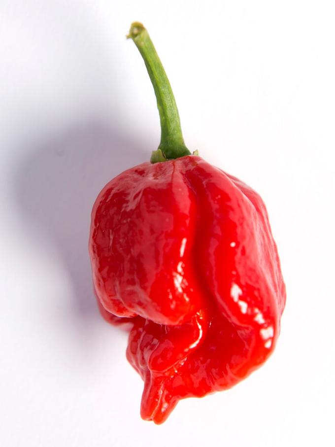 Những giống ớt cay nhất thế giới
