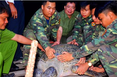 Con rùa 120kg được thả về biển trong đêm. Ảnh: Ngô Thanh Liêm