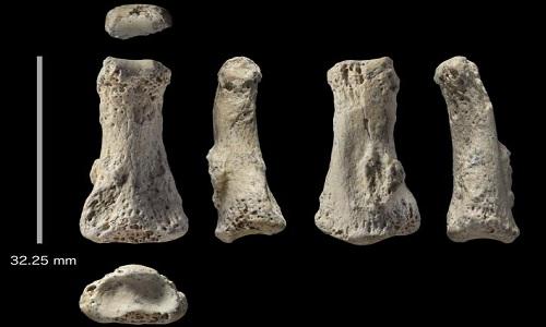 Mẩu xương hóa thạch 85.000 năm có độ dài 3,2 cm. Ảnh: Ian Cartwright.