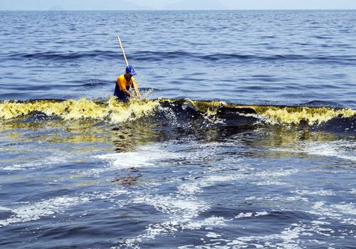 Vệt nước màu đen ven biển Đà Nẵng là do loài tảo giáp gây ra. Ảnh: Ngọc Trường.