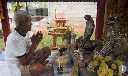 Ông Sommard Marurat dựng đền thờ với hai bức tượng rắn hổ mang chúa bằng gỗ nổi bật. Ảnh: SCMP.