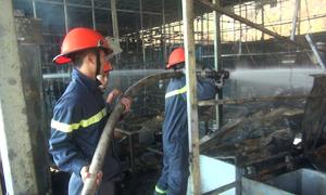 Cháy khu nuôi trồng sâm Ngọc Linh lớn nhất Đà Lạt