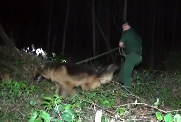 Quảng Trị dùng chó nghiệp vụ truy bắt kẻ vận chuyển 76 kg thuốc nổ